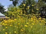 ペンションのお花たち
