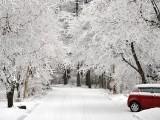 木々は真っ白