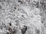 雪のような氷です