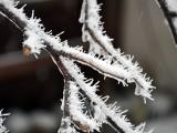 氷に雪の結晶が付着しました