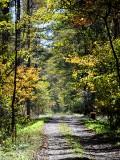 原村の森は明るい