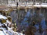 ミズバショウの咲く池