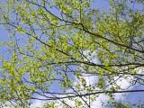 きれいな若葉色と空のコントラスト