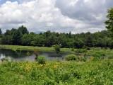 まるやち湖に群生するニッコウキスゲ