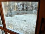 窓越しに見える雪