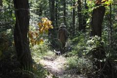 木漏れ日の森を歩く