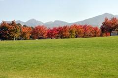八ヶ岳の紅葉は、ここから始まります