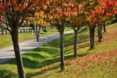 落ち葉と芝生のコントラスト