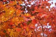 ペンションの秋