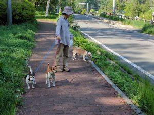 親水公園を歩く