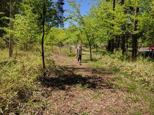 原村の森の小径を歩く