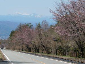 街路樹も春の様相